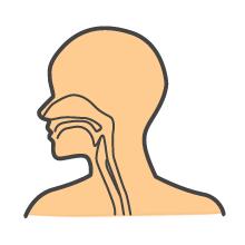 上喉頭ガン